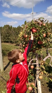 jonapplepicking1